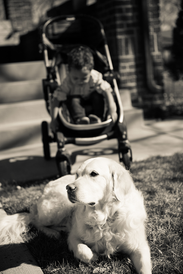 Dog portraits with family
